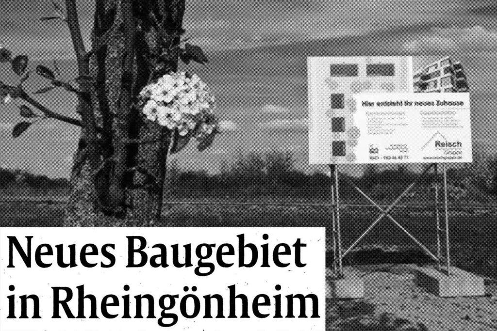Reisch Gruppe Presse Sommerfeld